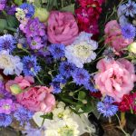 Cottage garden flowers in Kent